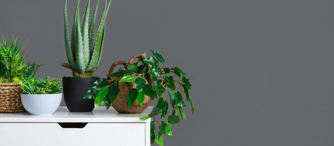 Stylish interior with different houseplants on table over grey wall, copy space